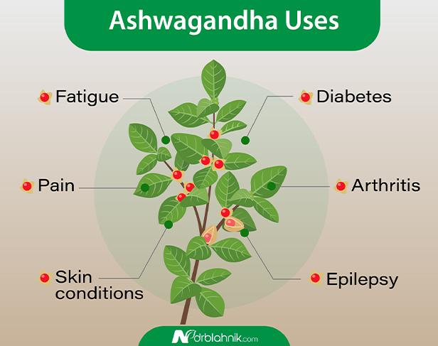 Ashwagandha Uses