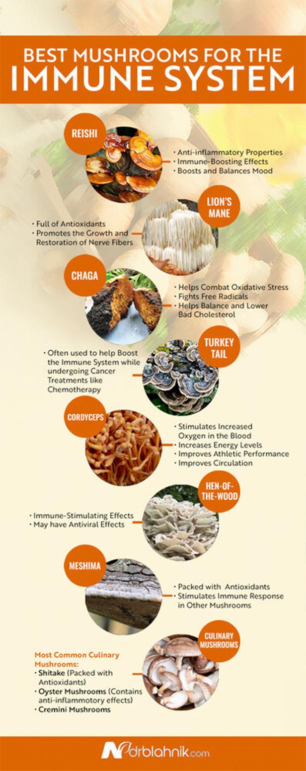 Mushroom Immune System Infographic