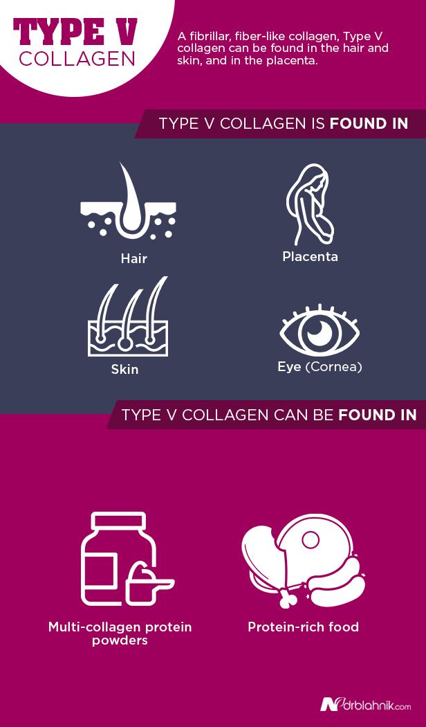 Type V Collagen